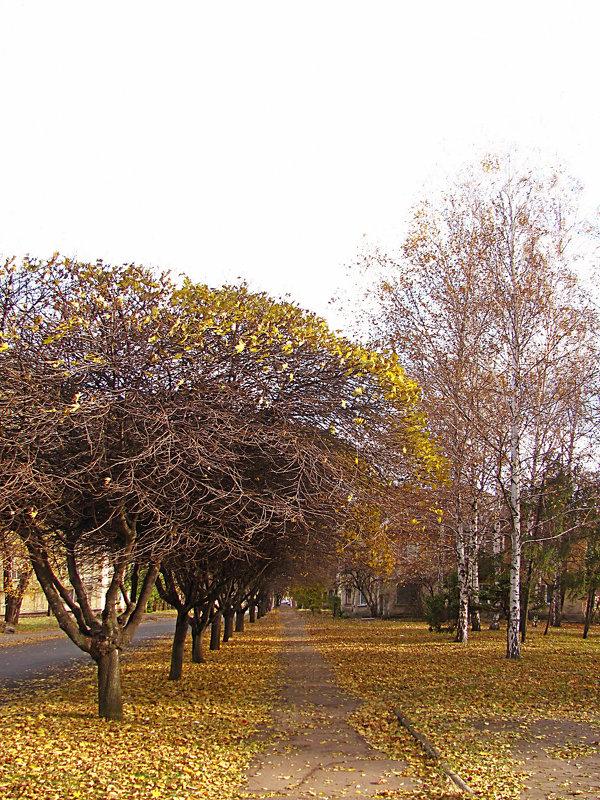 Осенней улицей домой - super-krokus.tur ( Наталья )