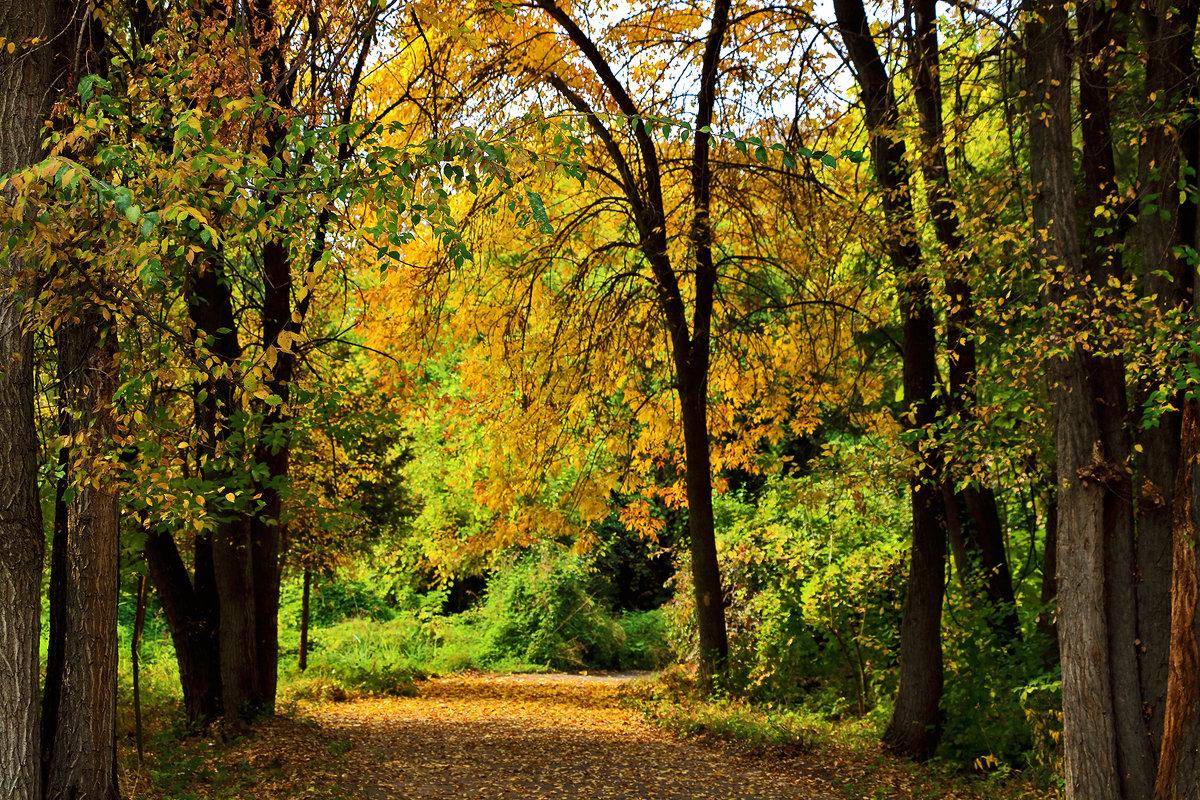 Осень в ботаническом саду - Светлана