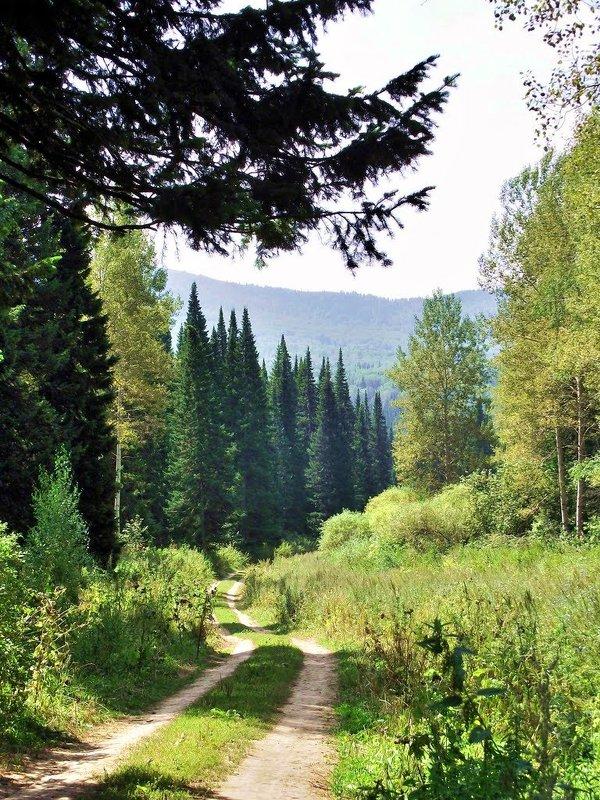 дорога в лесу - vladimir polovnikov