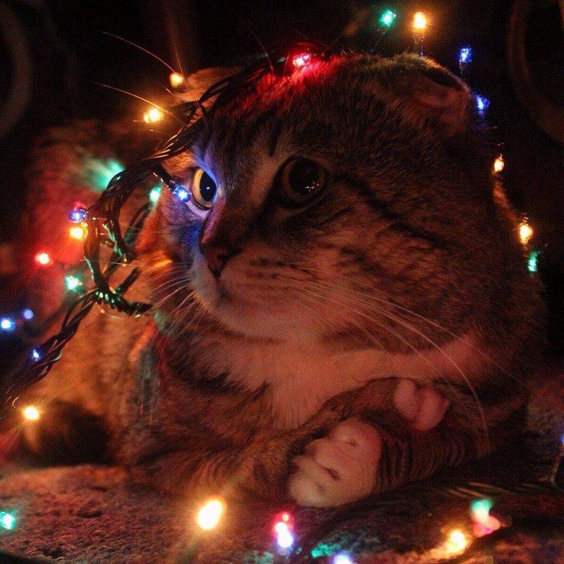 Кот Денис  любит новогоднюю суету - Виктория Левина