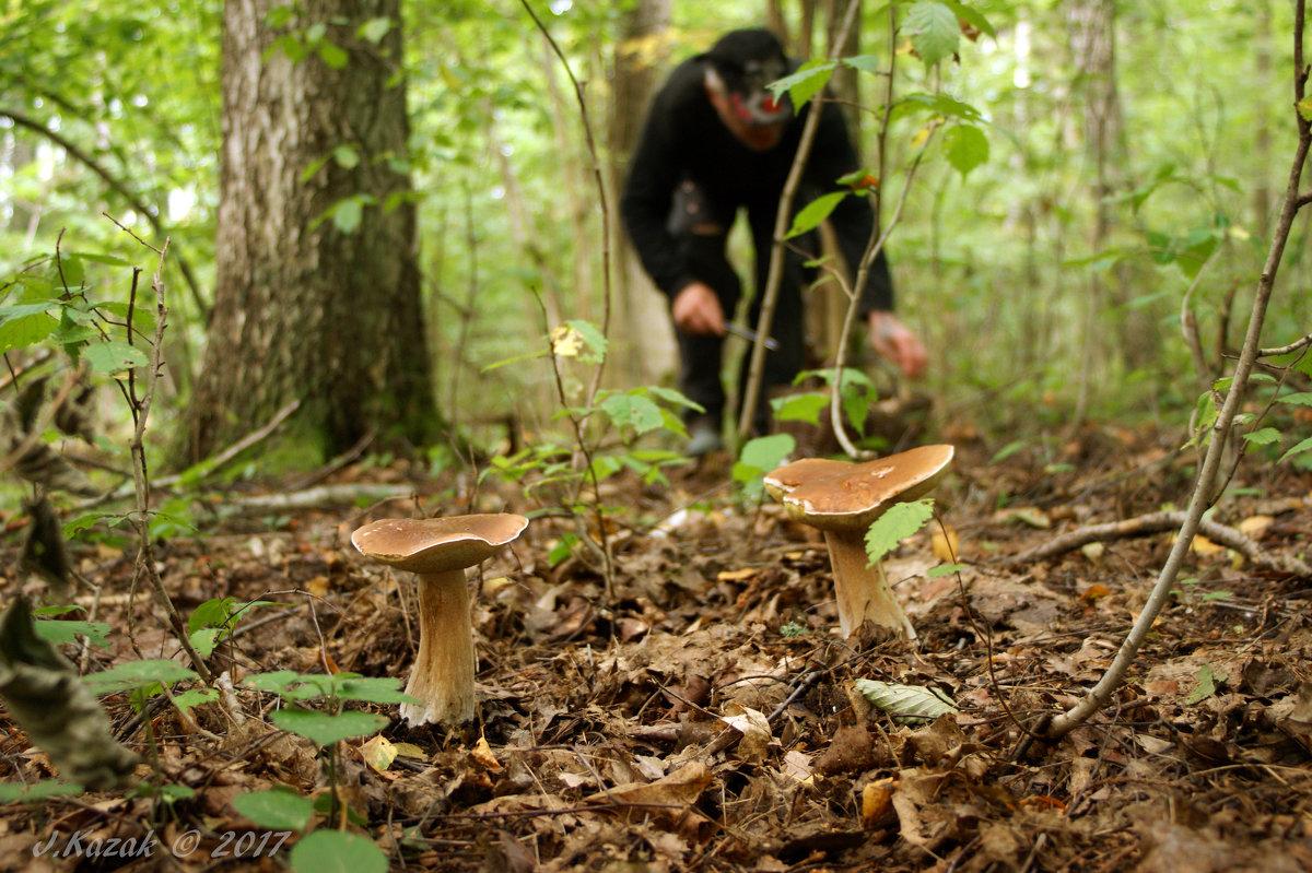 Ждут грибников своих грибы... - Елена Kазак