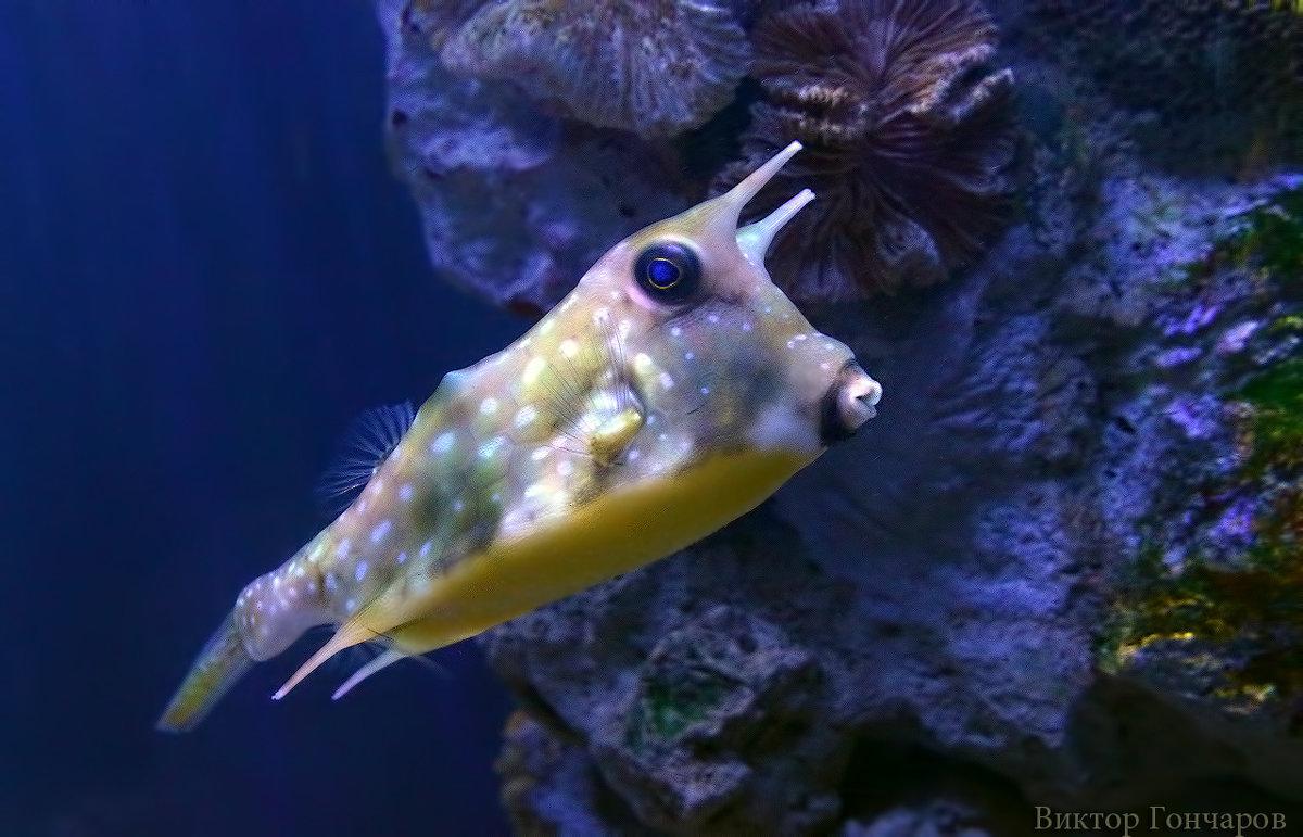 рыбка - Laryan1