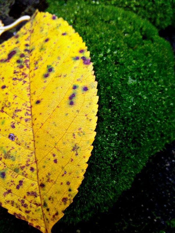 Осенний лист и мох - Татьяна Королёва