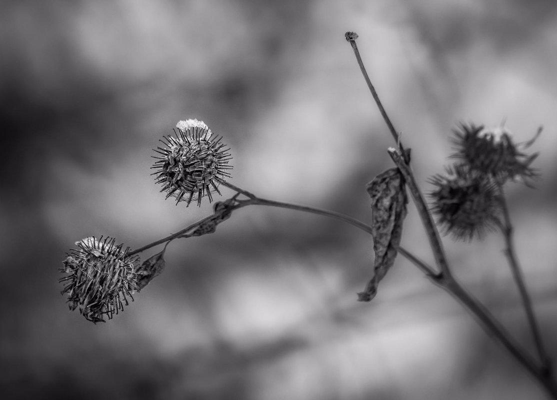 зимние цветы - Елена Черненко