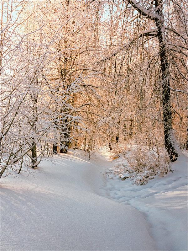 В зимнем лесу... - Александр Никитинский