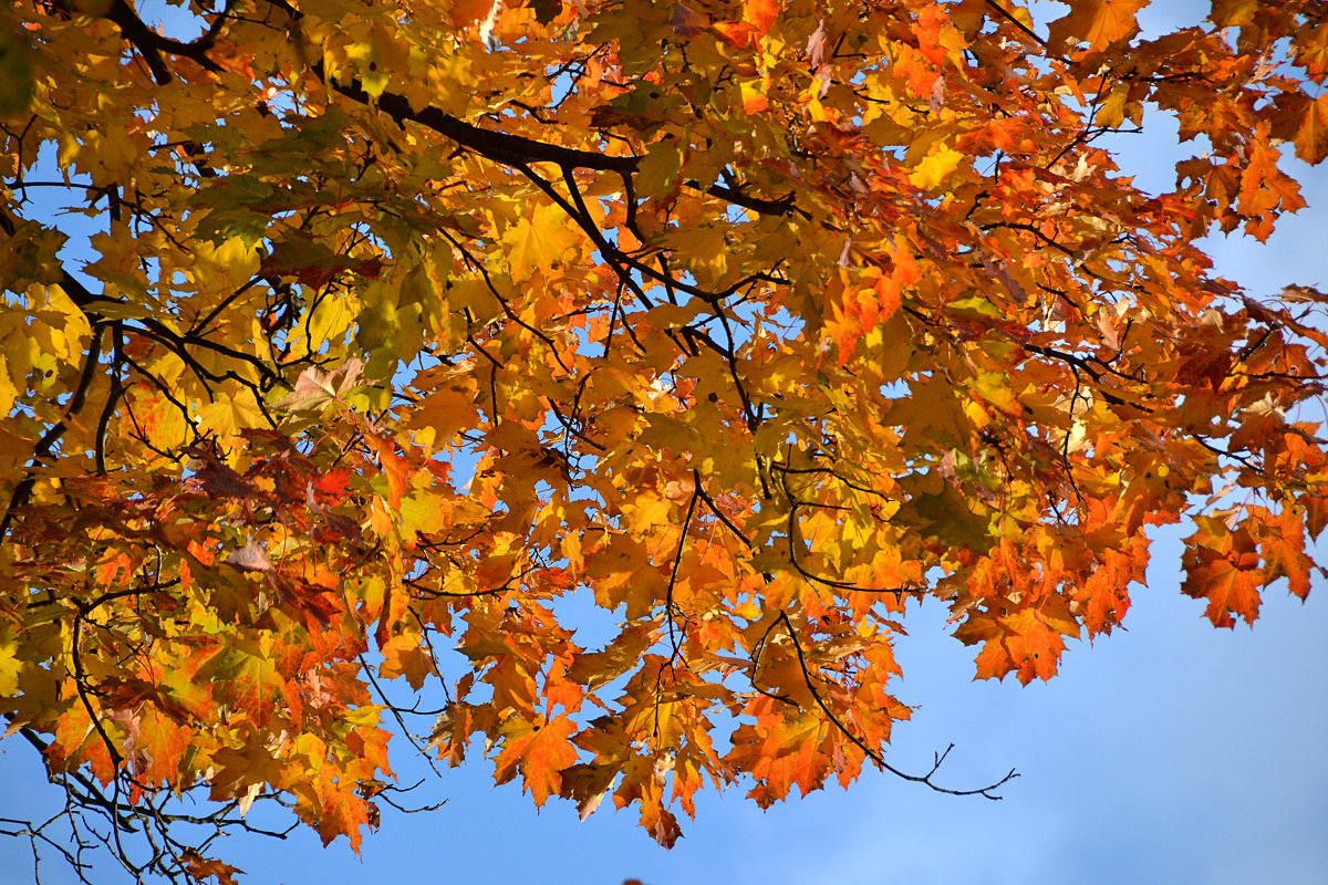Осень золотая... - НАТАЛИ natali-t8
