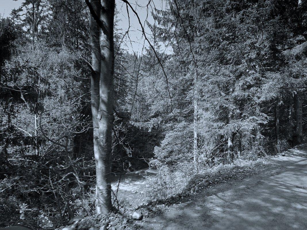 В лесу - Роман Савоцкий