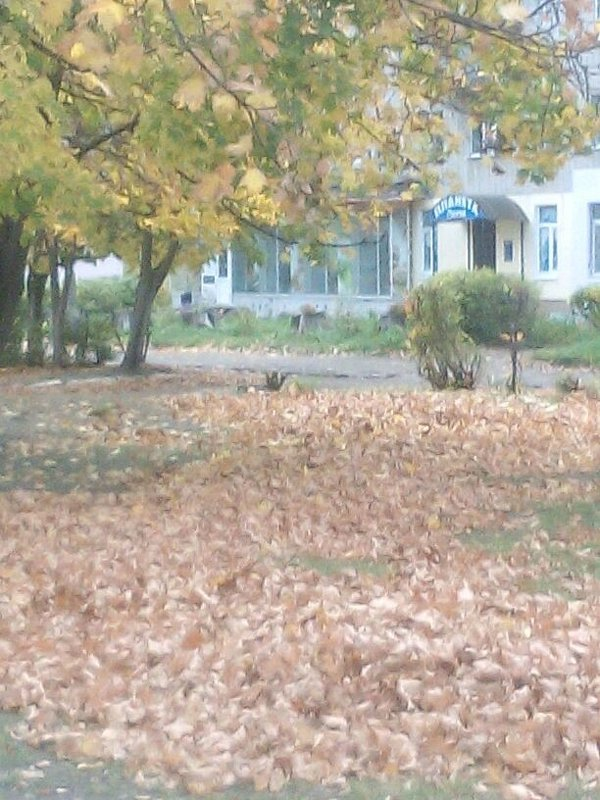 Осень в городе - Анна