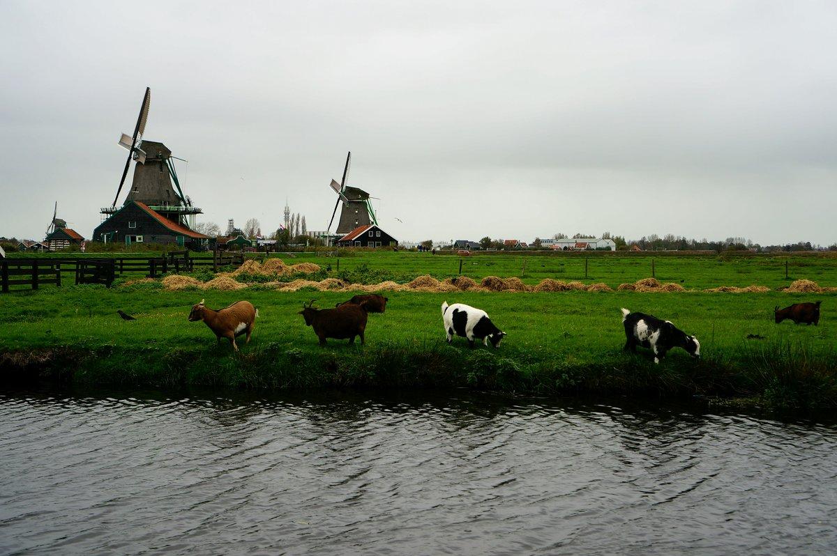 Голландский пейзаж - IURII