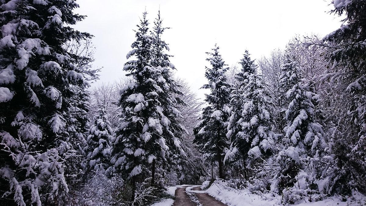 Утро после ночного снегопада - Лилия