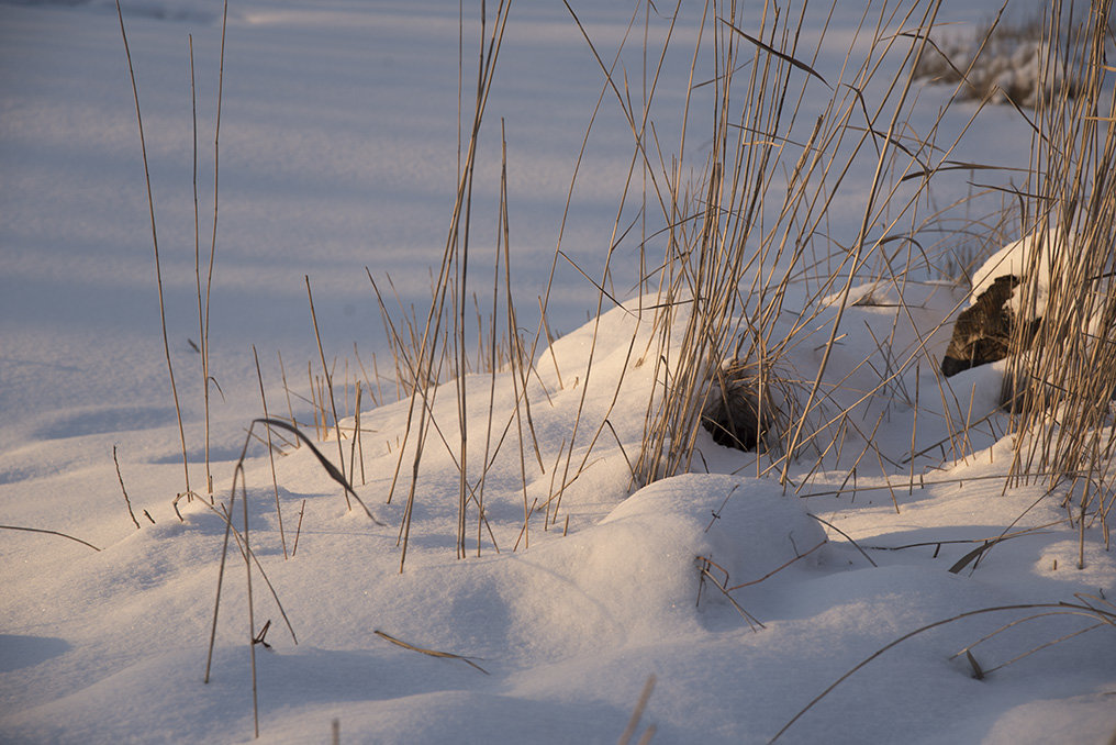Трава под снегом - юрий Амосов