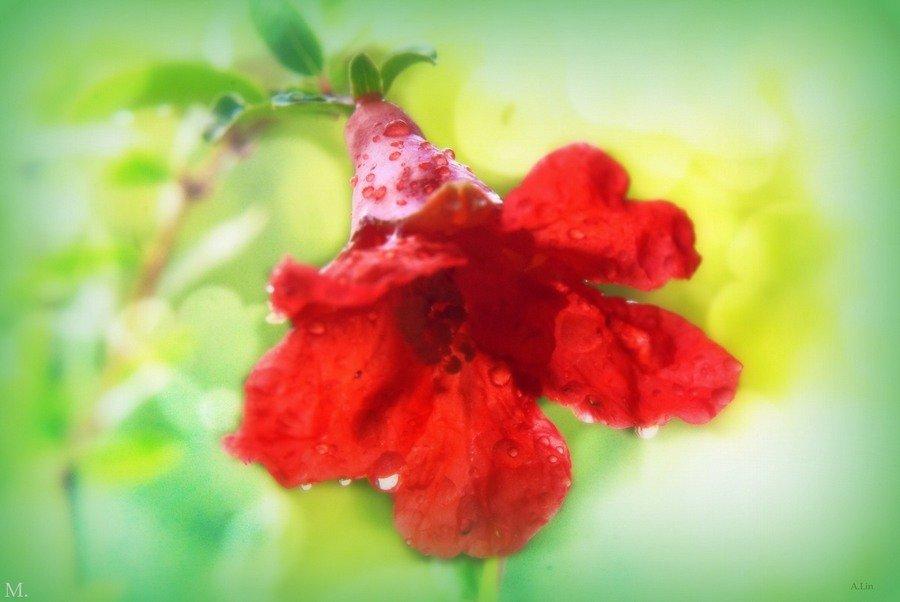 flower grenade - alexandr lin