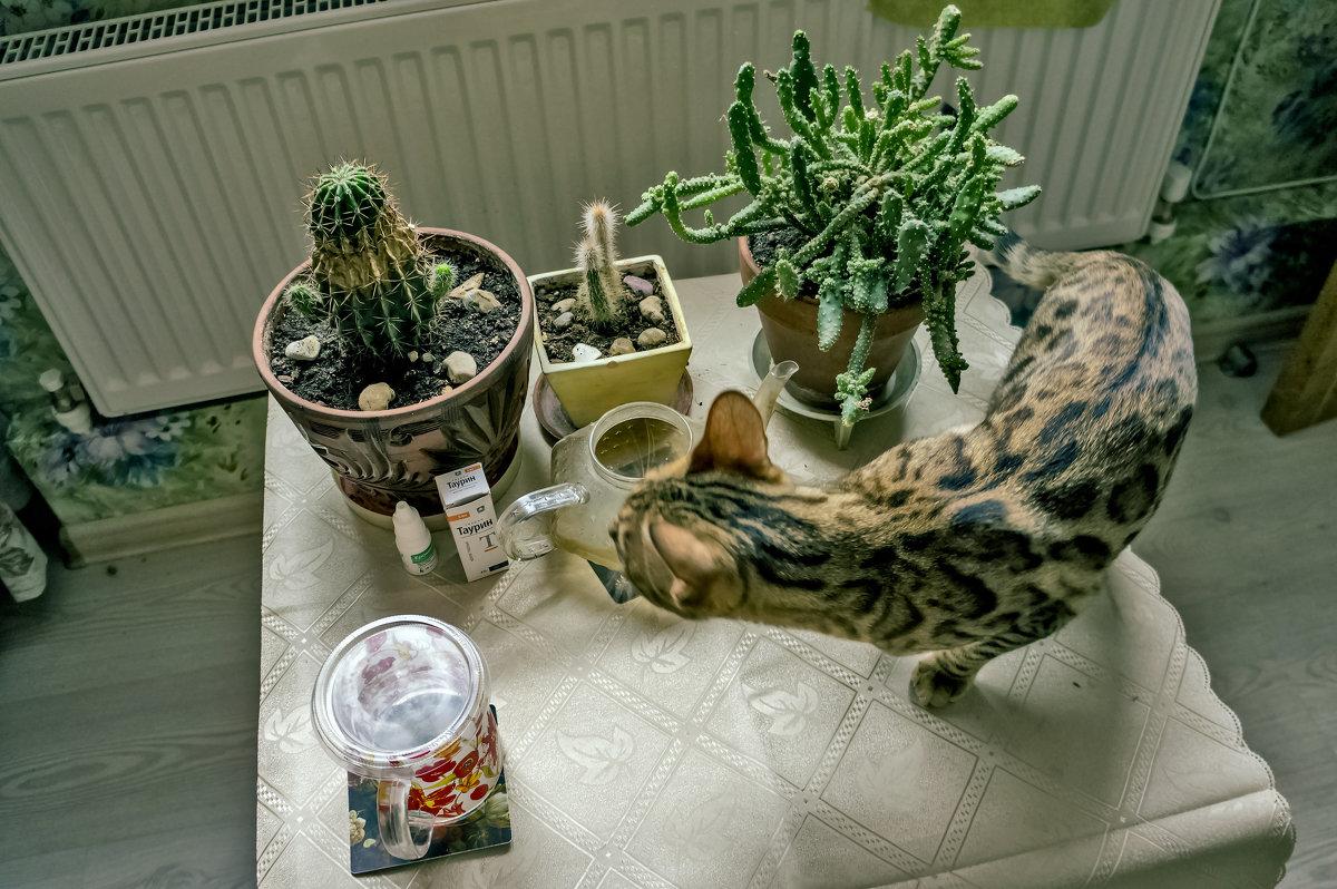 Охота на кактус - Ольга Маркова