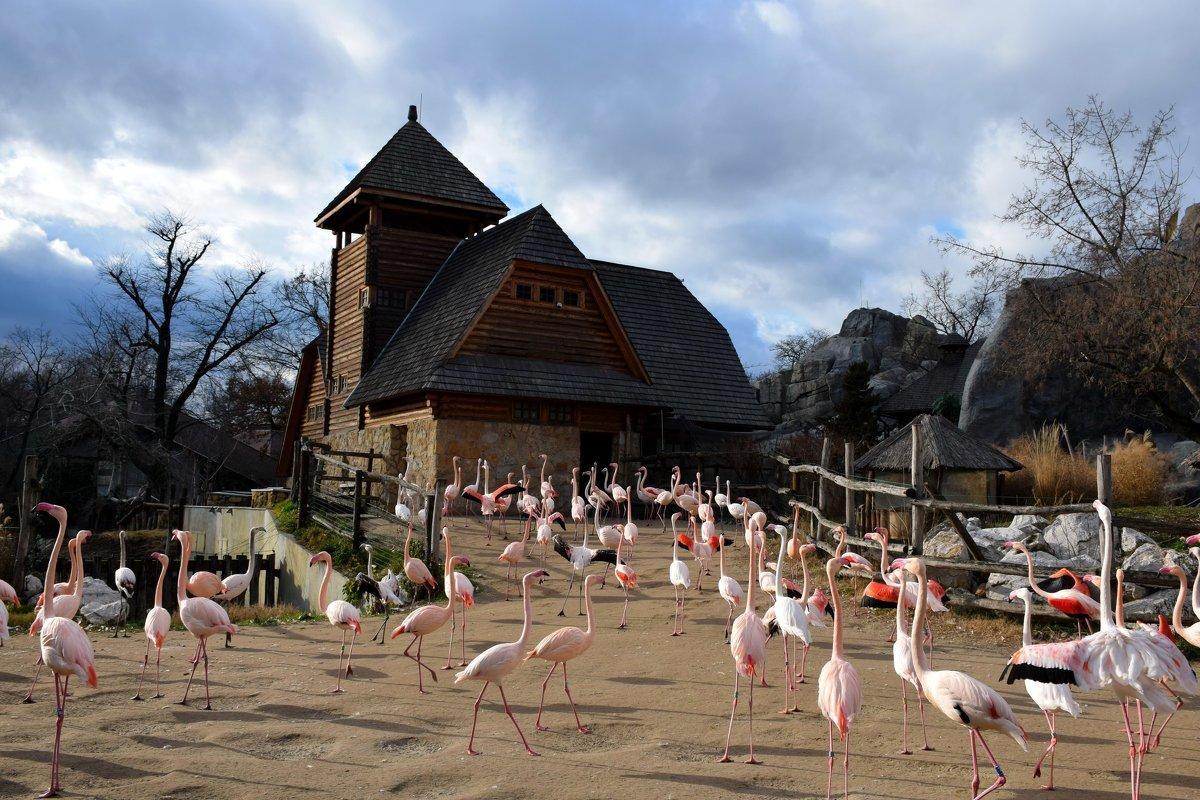 Фламинго - Катерина Клаура