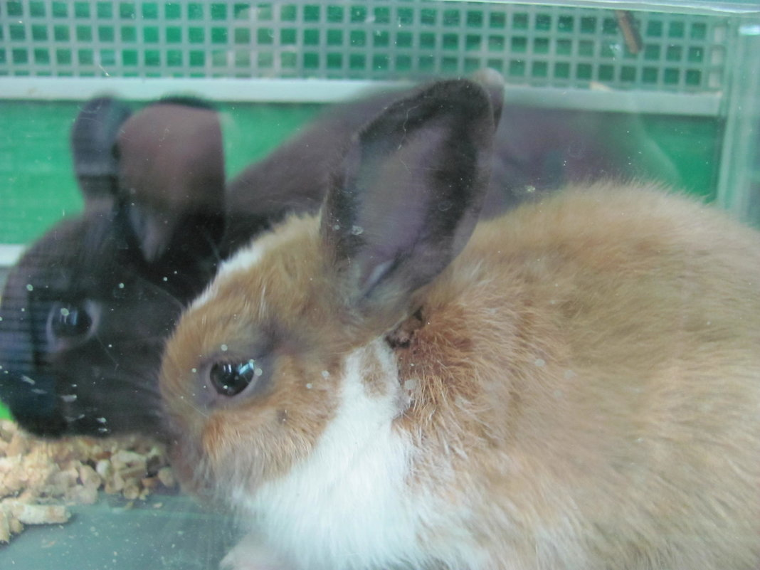 кролики - Зинаида