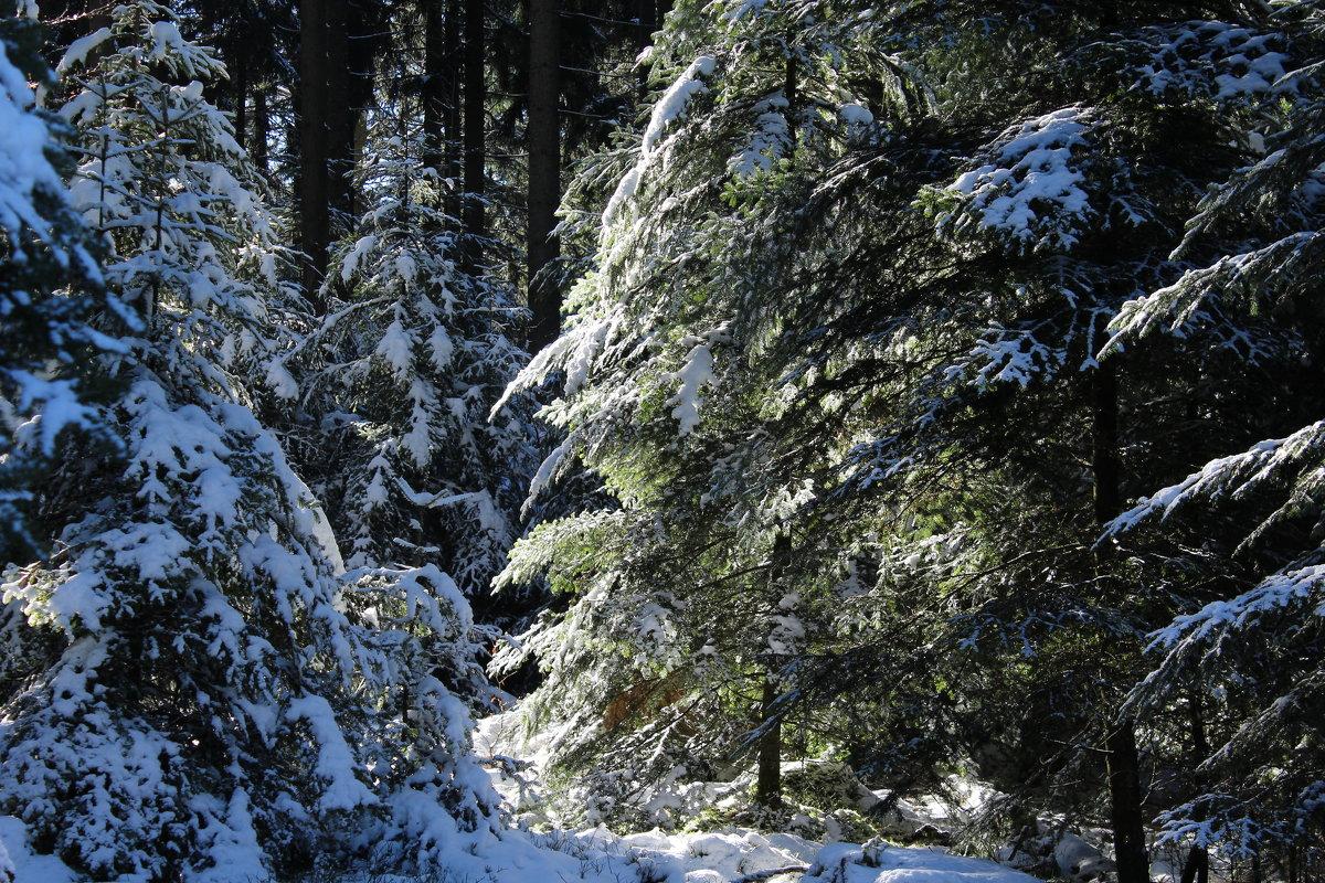 В лесу - Mariya laimite