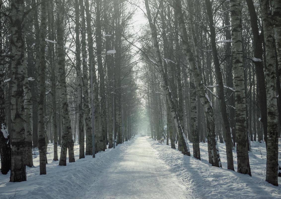Зимняя аллея - Виталий