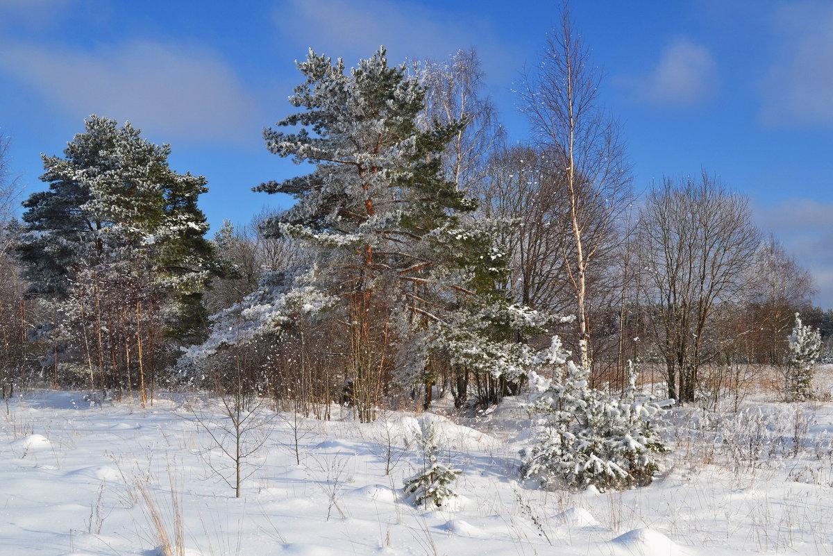 морозное утро - Светлана