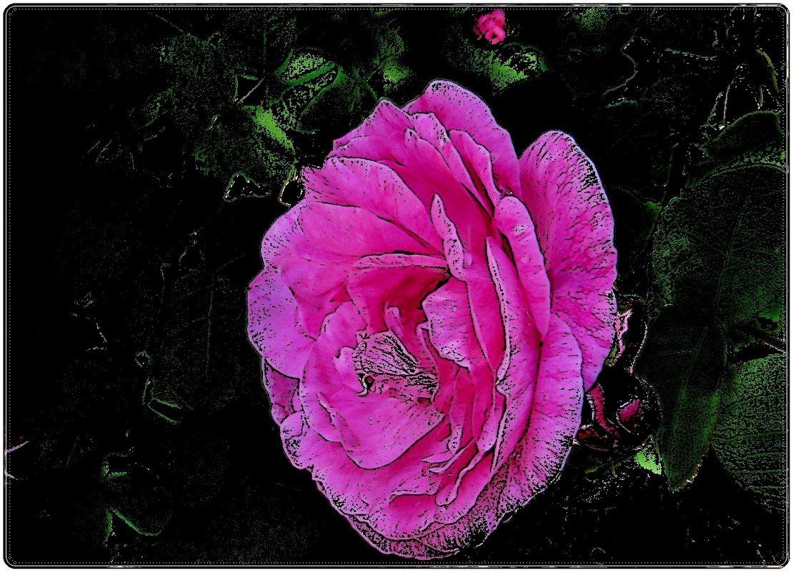 Розовая роза - Нина Корешкова