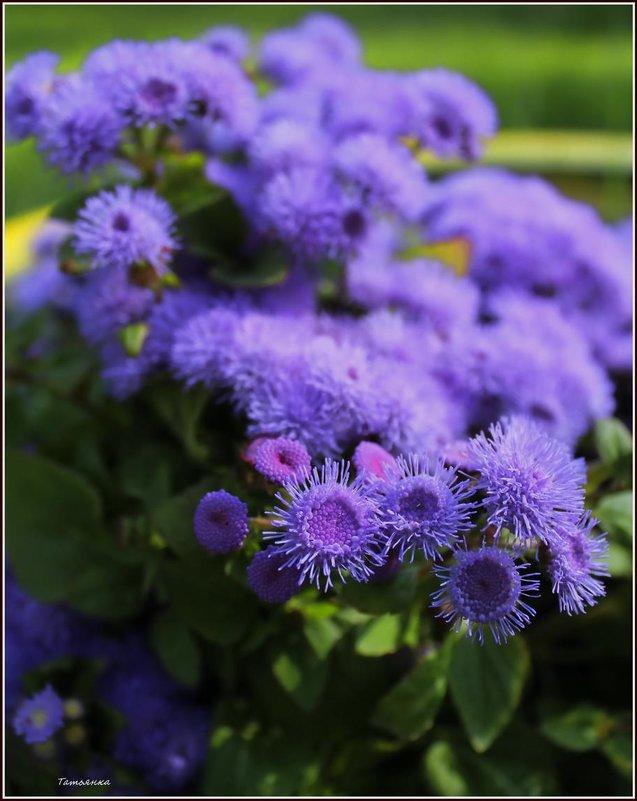 В мире цветов так тепло и прохладно.. - Татьянка *