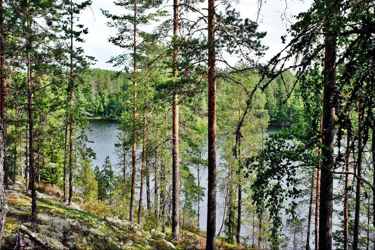 Национальный парк «Реповеси». Озеро Капиавеси - Елена Павлова (Смолова)