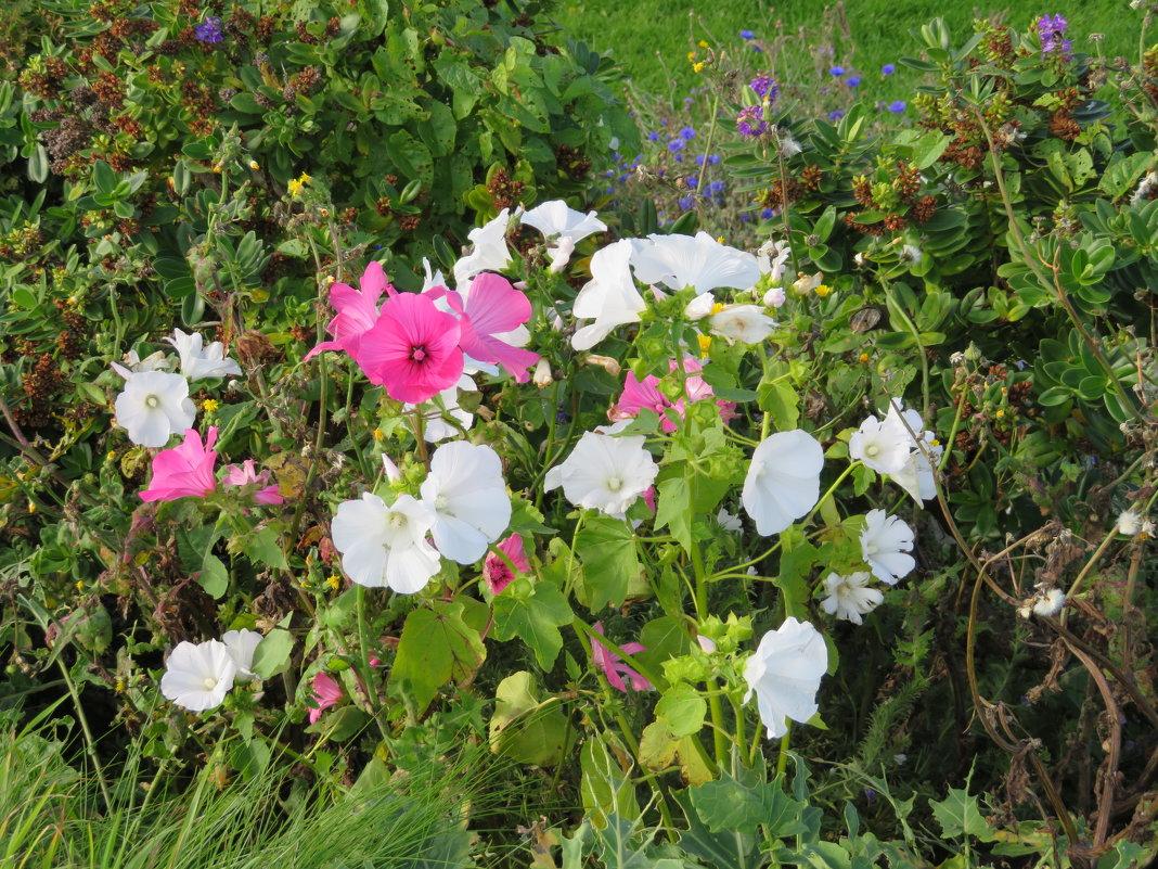 Цветы для Веры - Natalia Harries