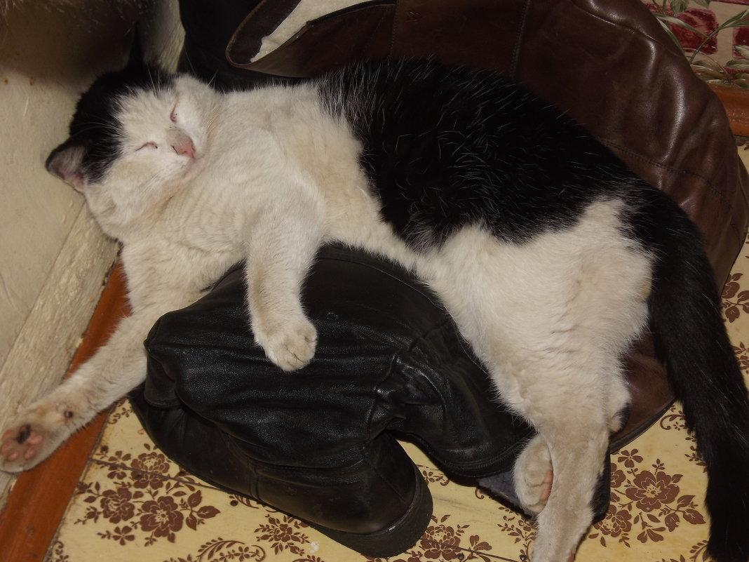 Кот в сапогах. - нина