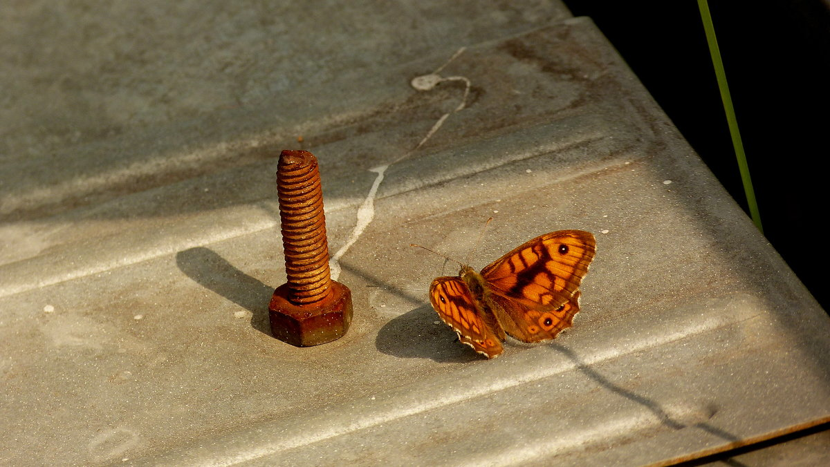 рыжая парочка : ржавый болт и бабочка - Александр Прокудин
