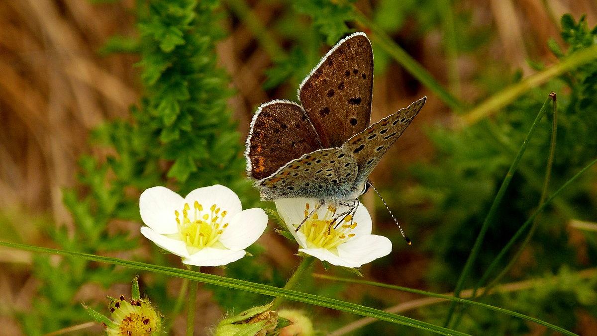 и снова бабочки...3 - Александр Прокудин