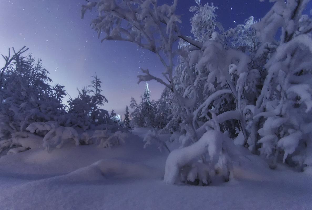Ночной лес - Татьяна Мурина