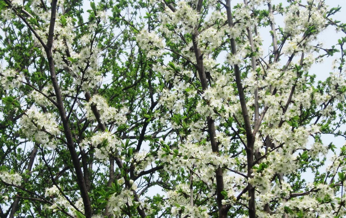 Хочется весны... - татьяна