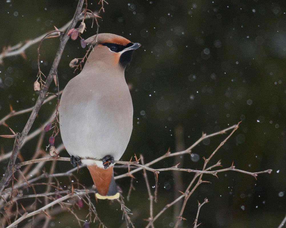 А снег идет - Юрий Кузьменок