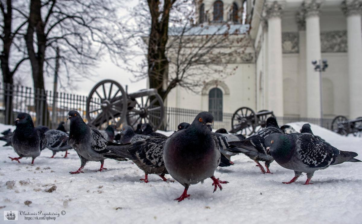 Пушки и голуби.. - Владимир Питерский
