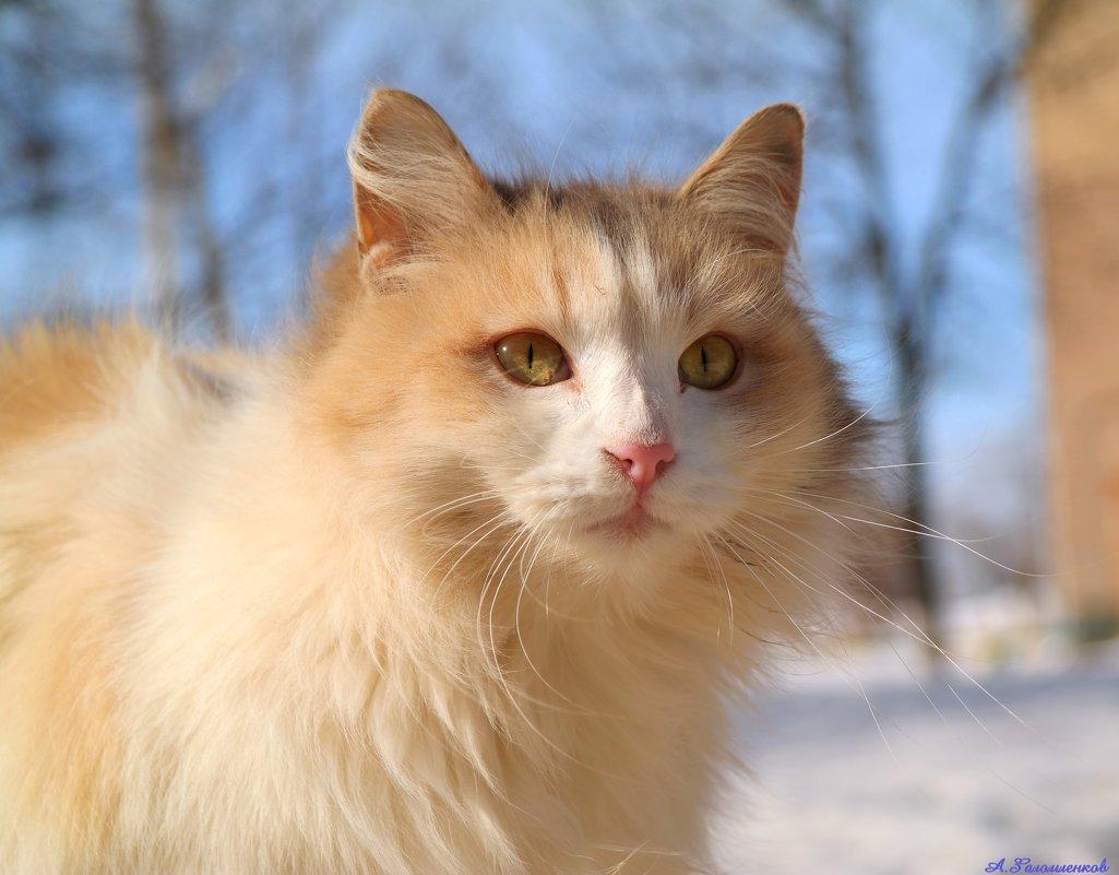 И в марте думами полна душа кошачья...:) - Андрей Заломленков
