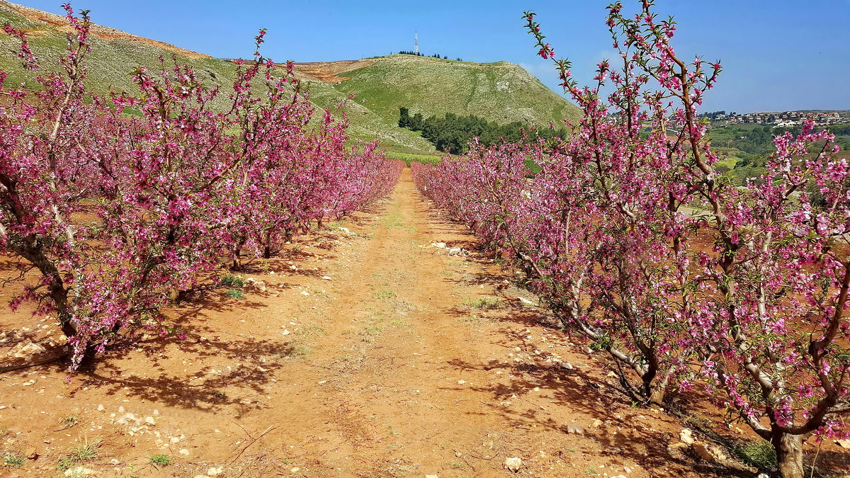 vit5 сады цветут - Vitaly Faiv