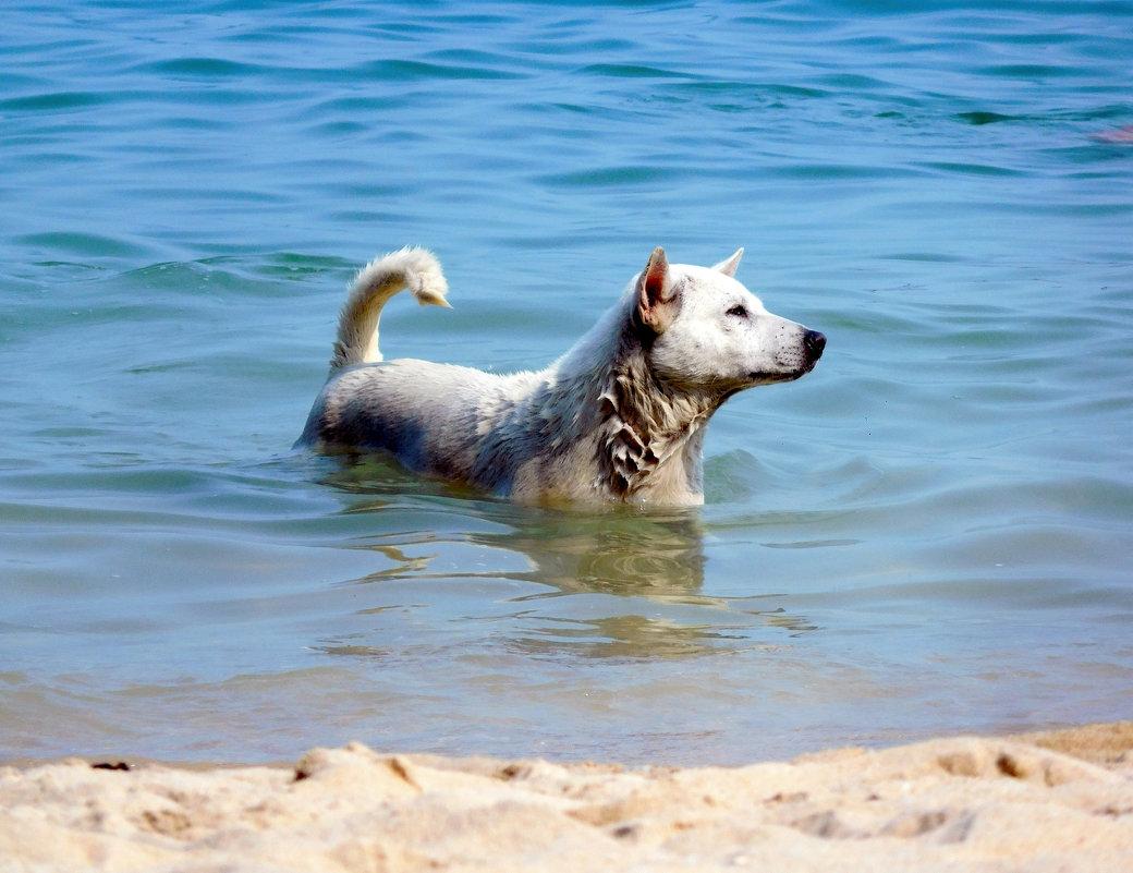 Соленый пес - ирина