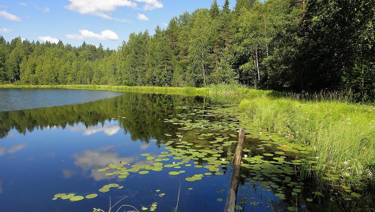Лесное озеро - Елена Павлова (Смолова)