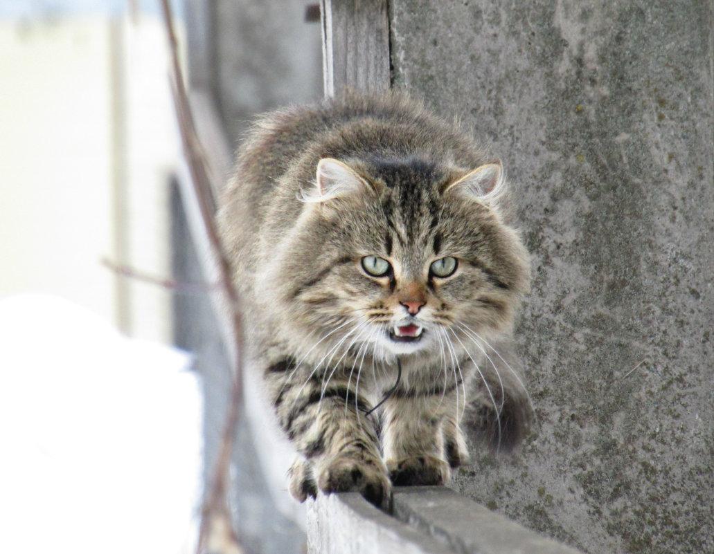 Фотограф, я доберусь и до тебя! - Vladimir Perminoff