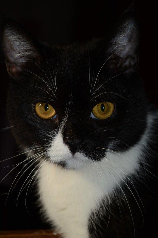 Мой любимый котик - Натали