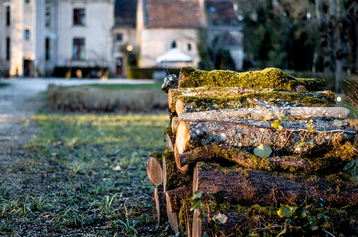 дрова в лучах заходящего солнца - sergio tachini