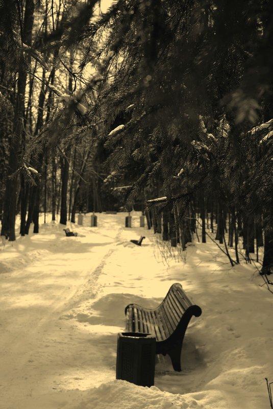 Скамейка в Павловском парке - Alex Bezvetrenniy