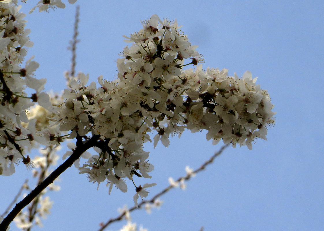 Весна - Наталья (D.Nat@lia) Джикидзе (Берёзина)
