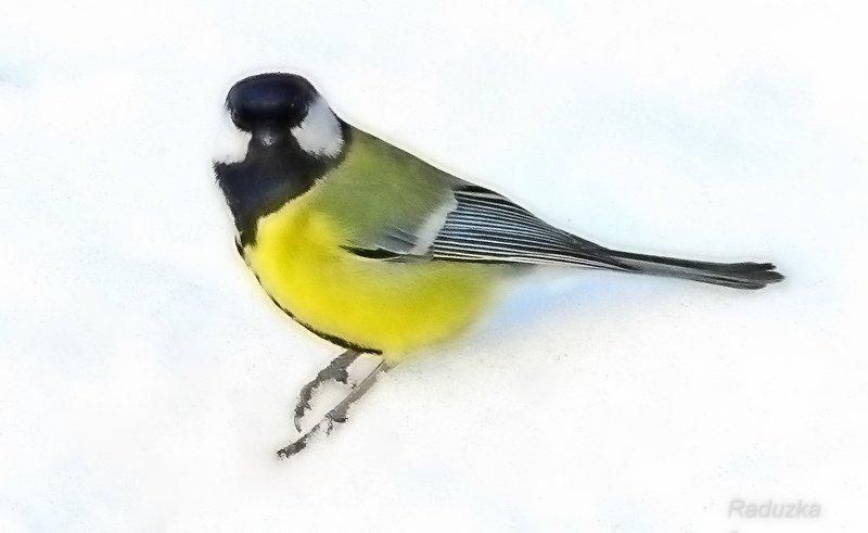 Птичка синичка - Raduzka (Надежда Веркина)