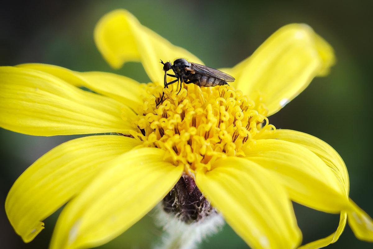 Желтый цветок. - Юрий Харченко
