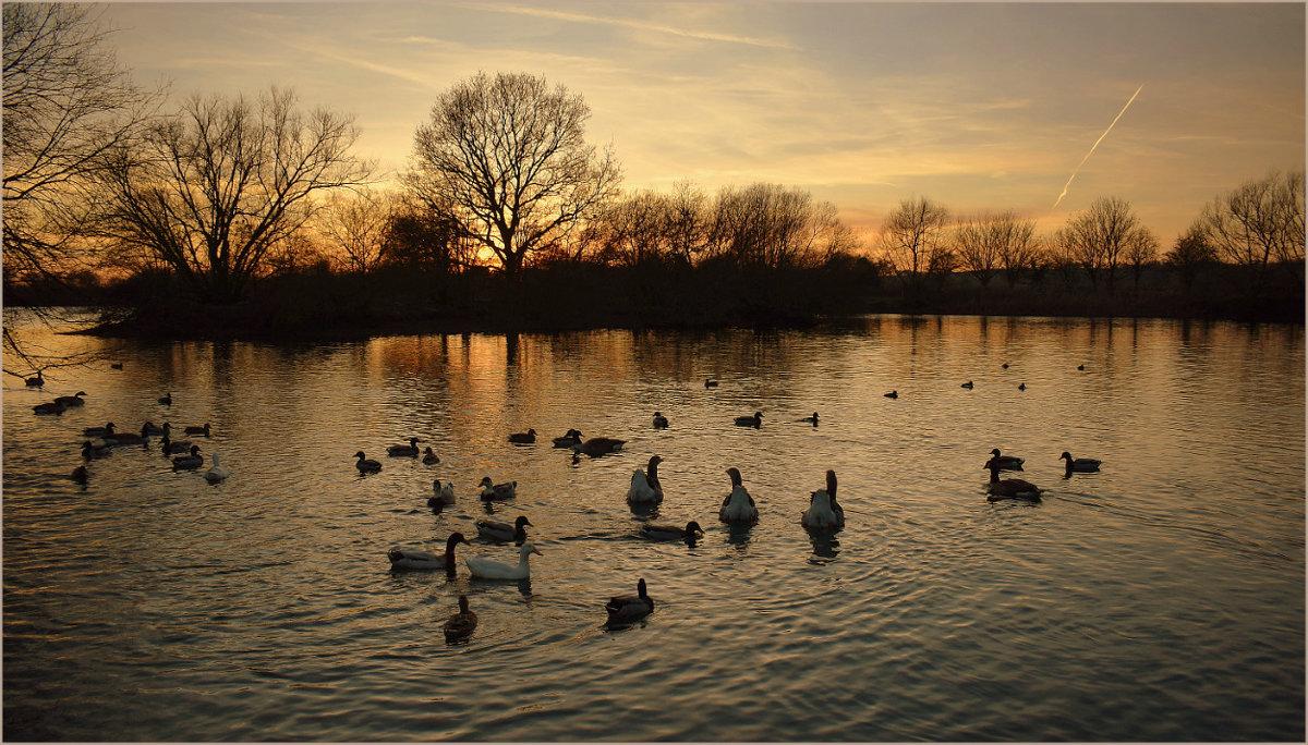 Три серых гуся любуются закатом...) - Пётр Галилеев