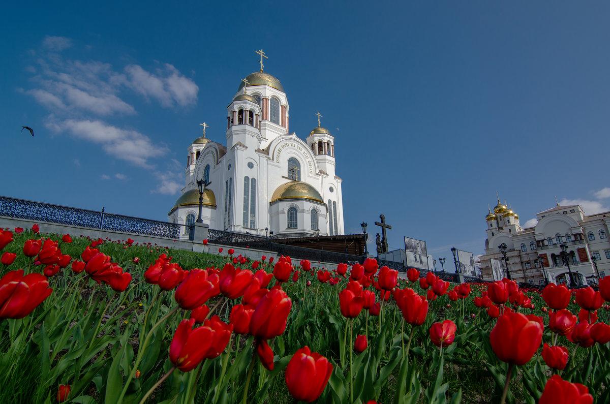 тюльпаны у Храма - Игорь Козырин