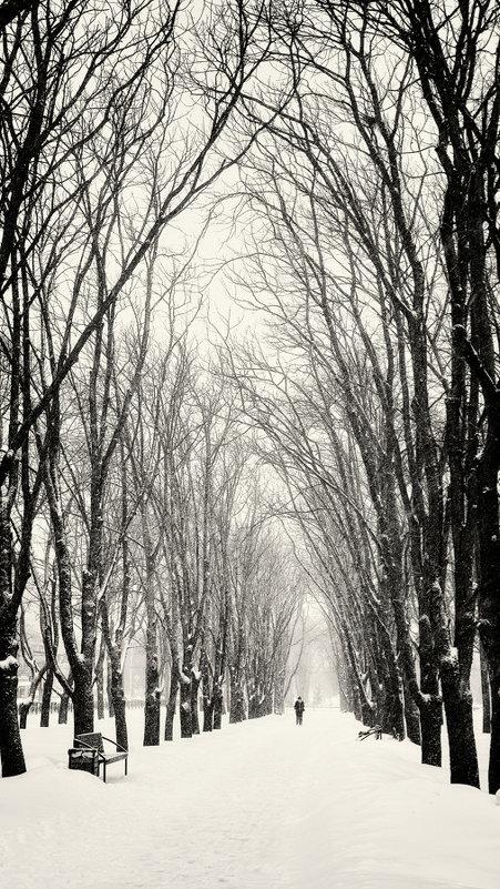 Majestic walk. - Андрий Майковский