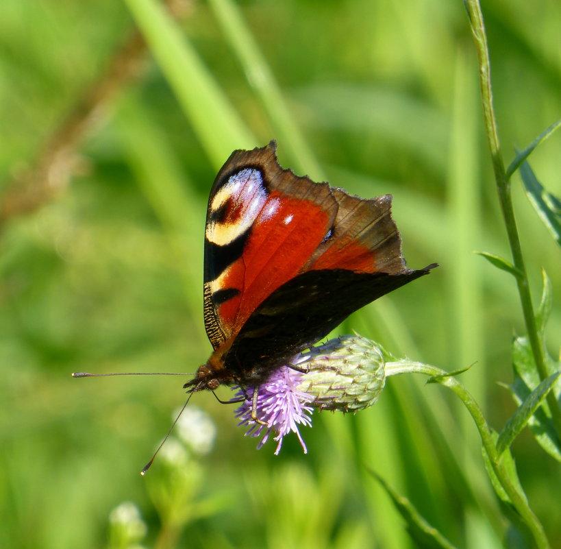 Бабочка и цветок - Татьяна Лобанова