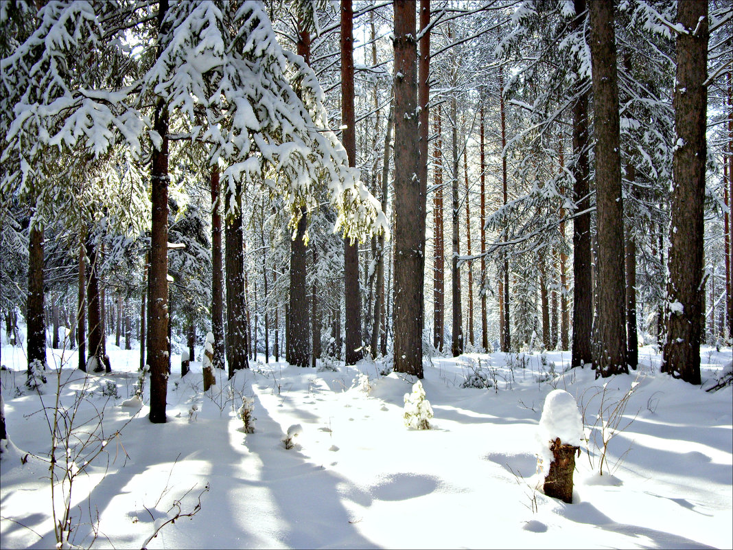 Мартовский лес - Leonid Rutov