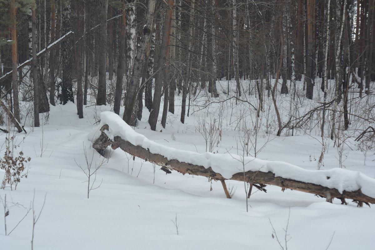 Шлагбаум. Лесной. После снегопада. - Михаил Полыгалов